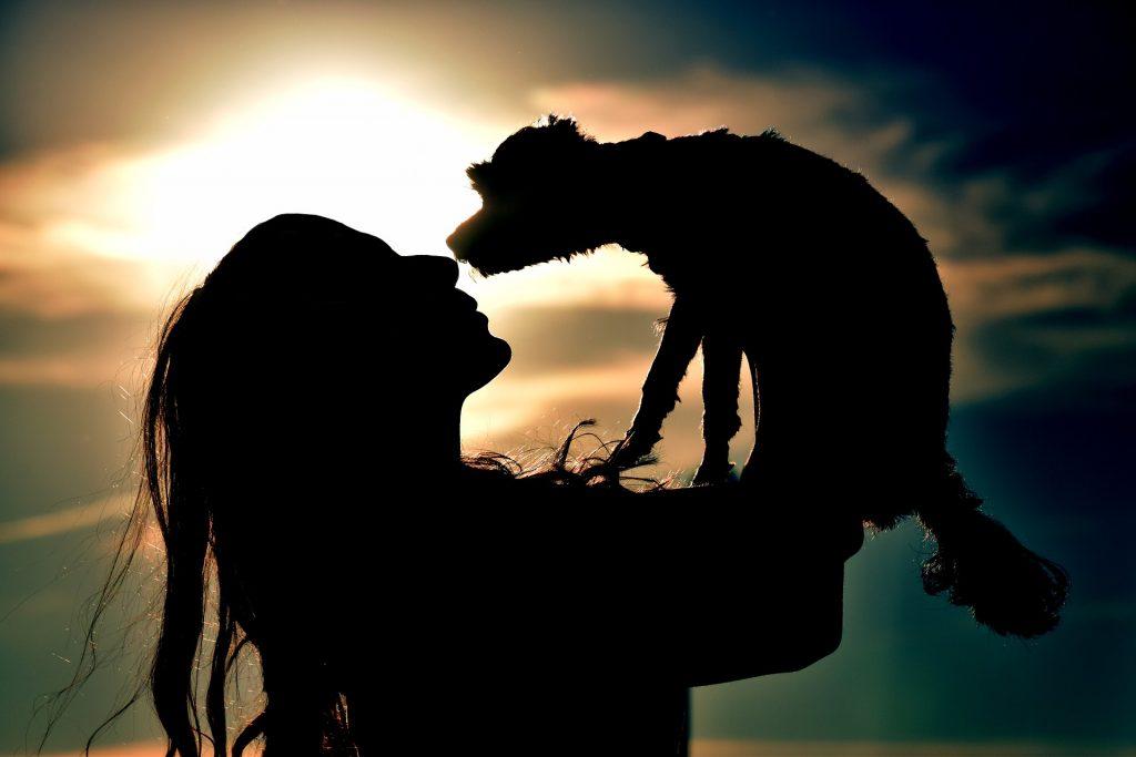 puppy love, dog found
